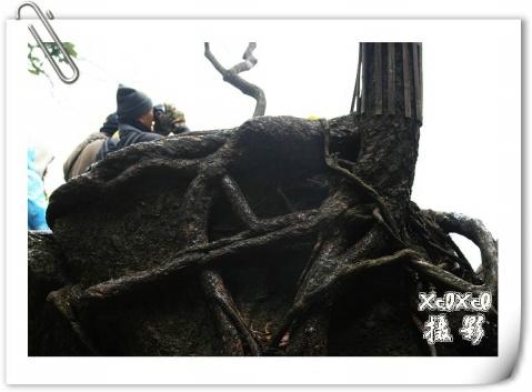 【环游闽赣浙】11、春寒料峭三清山 - xixi - 老孟(xixi)旅游摄影博客
