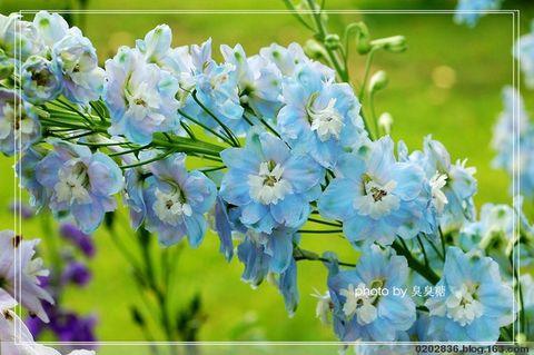 欧式墙纸青色大花贴图