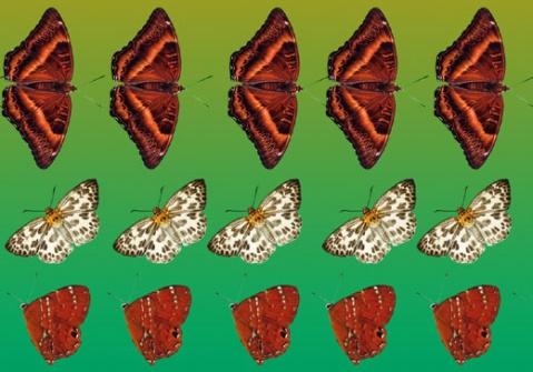 引用 三维立体画原理和观看方法 - 思源和谐 - 思源和谐