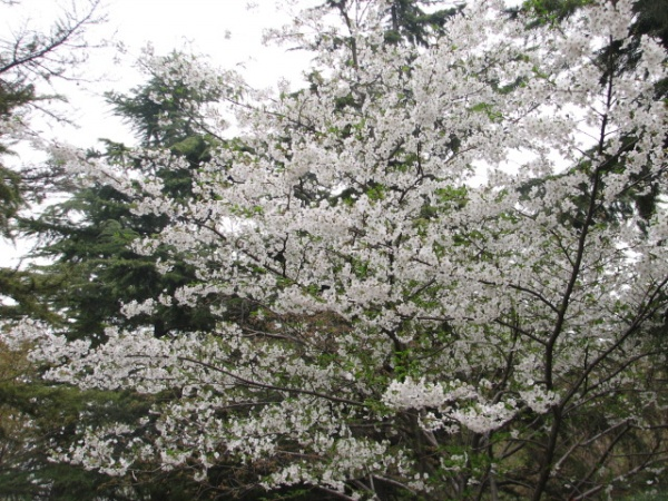 秋天里的春天 - liudingran - liudingran的个人主页