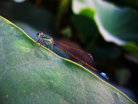 小蜻蜓(原创) - dlmtkly - 爱美树:在光影里寻觅······