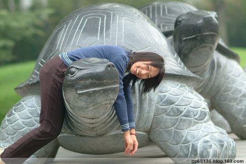 北京五塔寺的石龟 - 六月荷花 - 六月荷塘