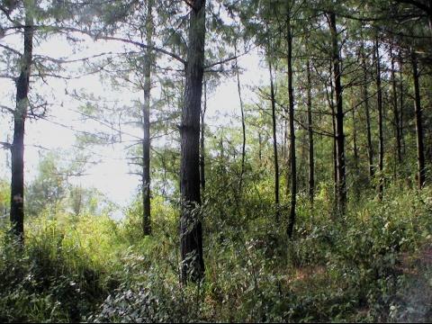 大森林林里的偶然 - 李玉真 - 玉山真人的原创博客