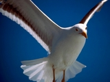 梦中飞翔(原创) - 冰芯雪蕊 - 冰天雪地的足迹