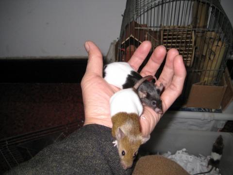 """[自]聪明的""""小鼠鼠"""" - 勿忘君山才子人 - 勿忘君山才子人"""