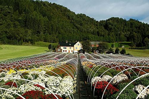 卑尔根到奥斯陆的途中____甜蜜生活 - 西樱 - 走马观景