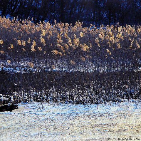 冰  河  芦  苇 - 绿色森林 - 绿色森林 风光摄影   2007