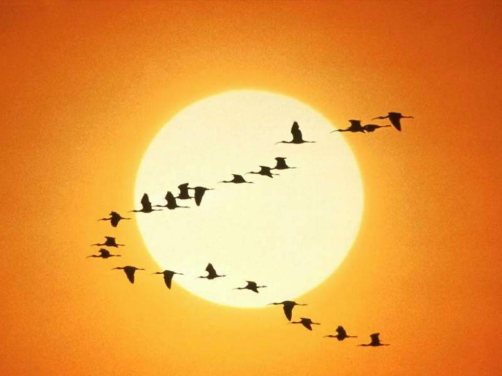 新诗------感悟!--  感谢你 ! 多象我们在一片蓝天愉快的飞-------------- - 一片蓝天 - 绘蓝天