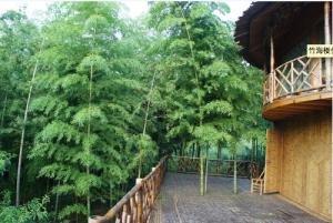 Bamboo See