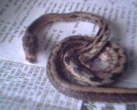 哈哈~~~洛今天在街上捡到只死蛇 - 库洛洛 - 库洛洛的博客