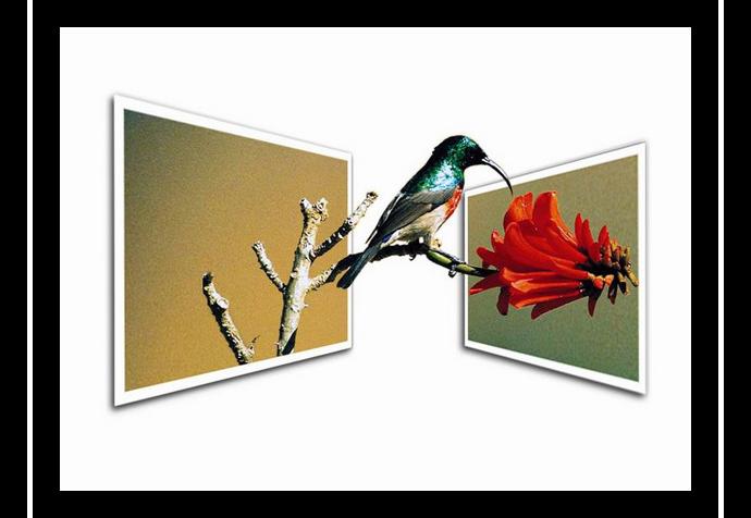 引用 非凡的表现 - 艺术创造美 - wangshihui.yi - 梅魂 欢迎你来做客。