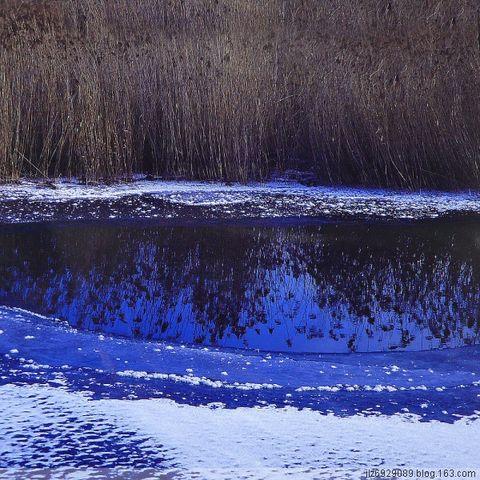 冰  河  芦  苇  【原创】 - 绿色森林 - 绿色森林 风光摄影   2007