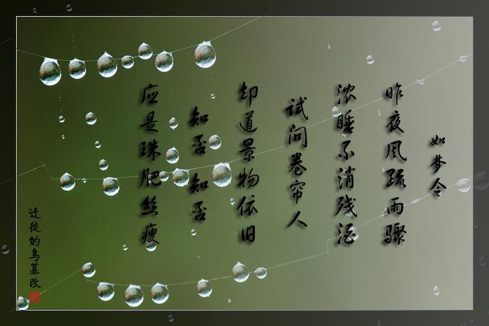 [原创]雨后小品——水晶珠帘 - 迁徙的鸟 - 迁徙鸟儿的湿地