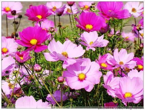 冬天里的春天  【原创摄影】 - 岁月无痕 - 岁月无痕