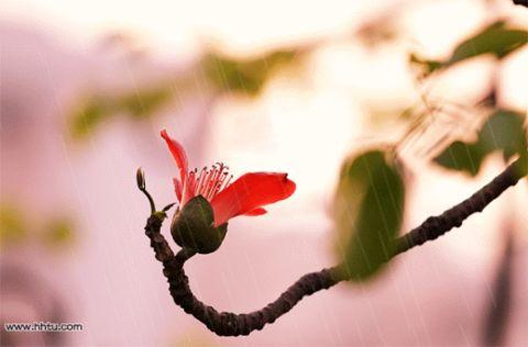 飘洒在字谜诗里的昵称【疏勒河的红柳原创】 - 疏勒河的红柳 - 疏勒河的红柳