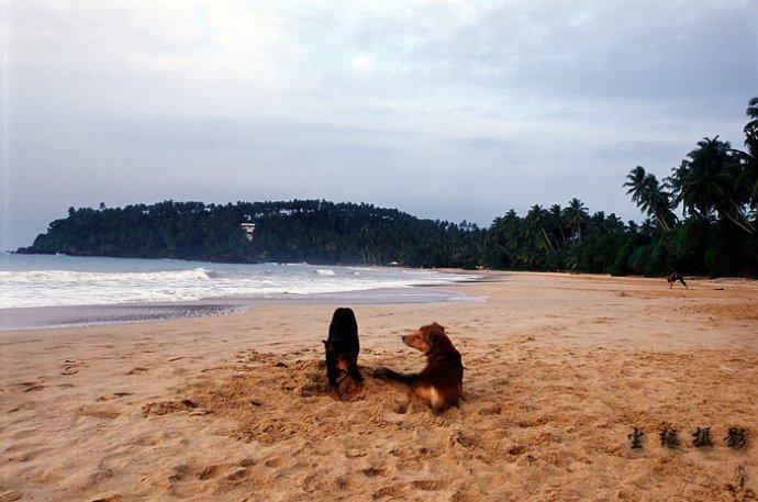我在斯里兰卡过新年 - Y哥。尘缘 - 心的漂泊-Y哥37国行