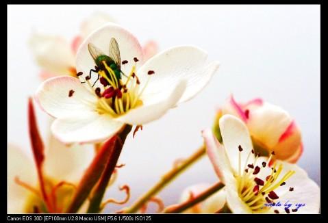 [原创]万里迊春30--蜂蝶恋春《虞美人》 - 自由诗 - 人文历史自然 诗词曲赋杂谈