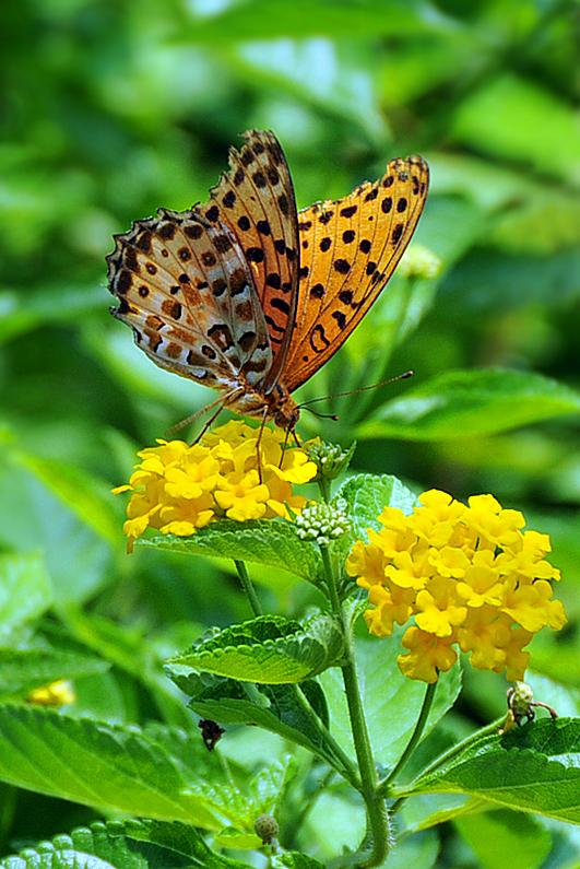 [原创]花儿与蝴蝶 - 歪树 - 歪树