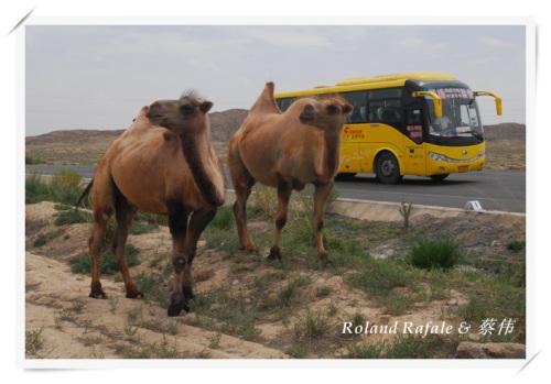 从北京到新疆 (1) - 蔡上尉 - 蔡伟的博客