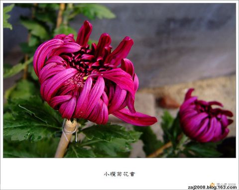 [原创]雍荣华贵,一片秋香…… - 爱君 - 欢迎来到爱君的博客