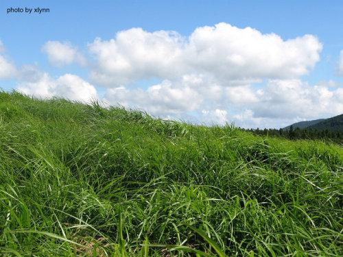 如梦如幻的济州岛篇 - 喜琳 - 喜琳的异想世界