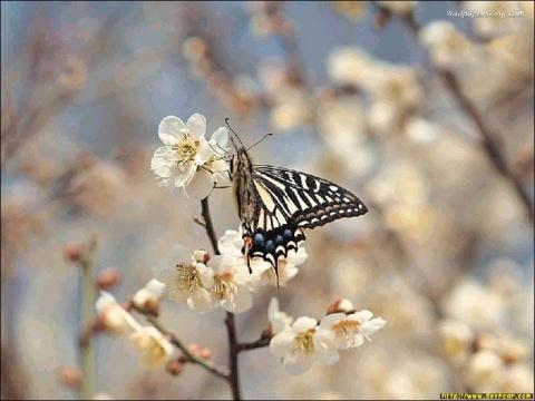 蝴蝶与飞蛾 - 无眠月 - 无眠月的博客