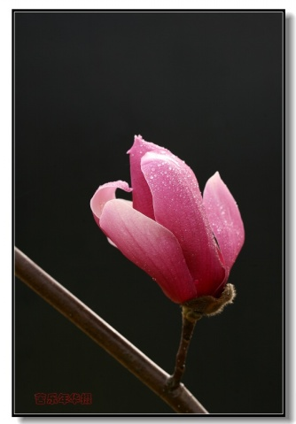 一个美丽的名字《玉棠春》 - 苦乐年华 - 苦乐年华的博客