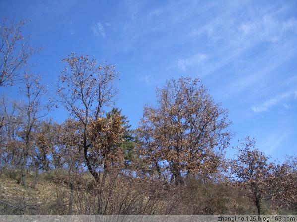 (原)深秋的山野 - zhanglino.125 - 晋娘的博客