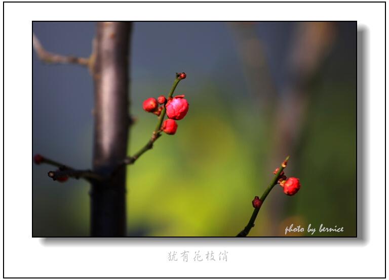 【原创摄影】犹有花枝俏 - 王工 - 王工的摄影博客