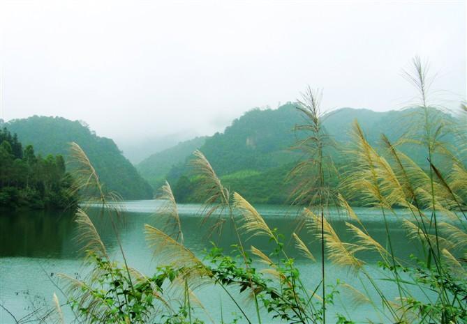 深圳出发醉蝶花海,玩清溪驱湿热 - 失踪周末 - 失踪周末