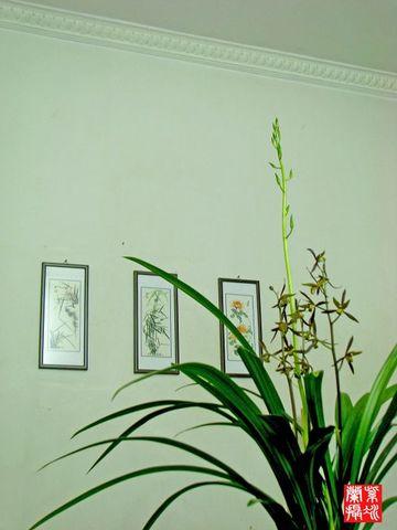 咏墨兰(二首) - 紫冰兰 - 莲心苑。紫冰兰