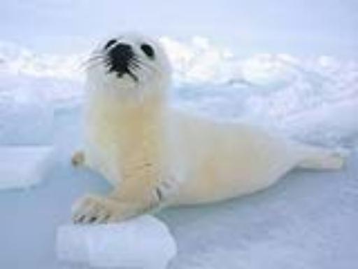 圣诞童话版:冰天雪地可爱小海狮 - 潇彧 - 潇彧咖啡-幸福咖啡