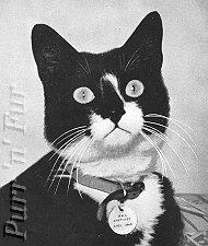 好猫西蒙 - 陈悦 - 陈悦的博客