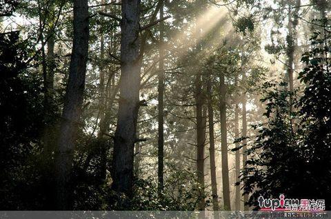 (原创诗歌) 沉醉女儿的森林画中 (大森林之恋系列二) - 沙丘 - 沙丘文学作品博客