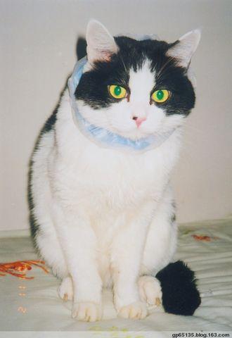 爱猫日记(三) - 六月荷花 -  六 月 荷 塘