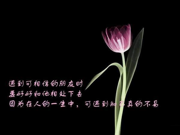 人生百味[原] - 富贵闲人 - 富贵闲人