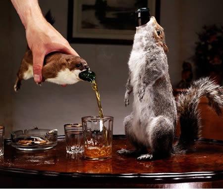 全球最怪异的十款酒精饮料,你敢喝么 - 博闻网 知道就好 -