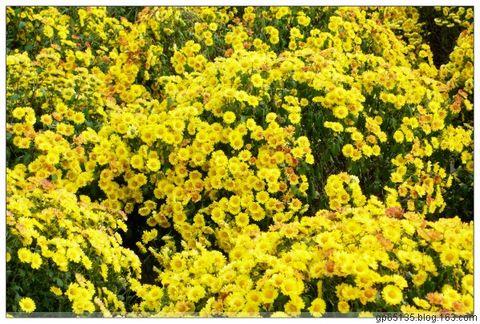 六月荷花摄影诗歌《岁暮萧索》(16) - 六月荷花 - 六月荷花的池塘