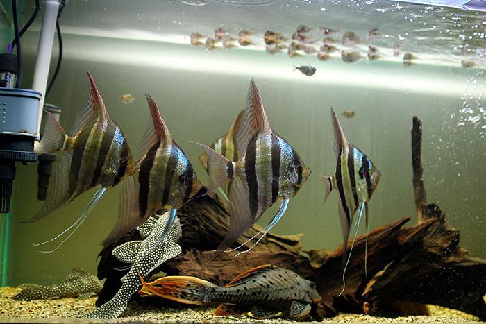 异型埃及混养缸欣赏 - x-999 - 牧 鱼 水 族