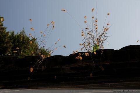 西 递   (原创) - 黄山松 - 黄山松的博客——
