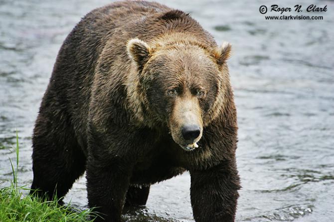 北极动物被捕猎
