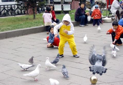 【原创】哈尔滨印象(2002.10) - 珠峰 - 珠  峰  博  客