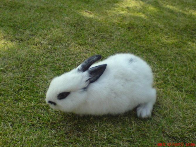 我家养的小兔子