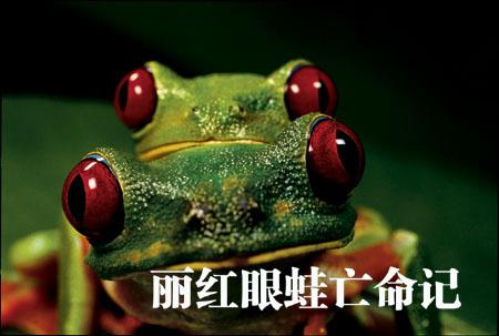 丽红眼蛙亡命记(一)(2006年11月号 美国国家地理特稿) - 华夏地理 - 华夏地理的博客