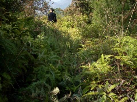 山区笔记(8)---- 春上狮子山茶园 - 山水悠游 - 山水悠游的博客