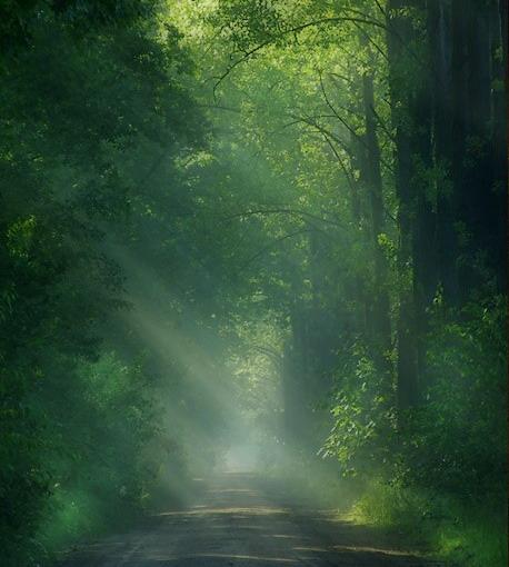 ◆雪事:神奇的丛林 - lygqihongling - 清荷铃子