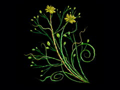 引用 黑色炫彩花纹  - 春暖花会开 - 春暖花会开的BLOG