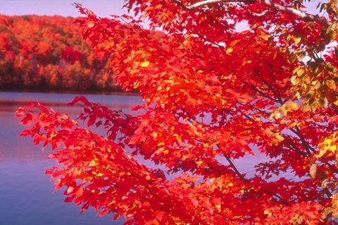 [美景欣赏]醉人的秋天 - 山间溪流 -   山间溪流的休闲屋