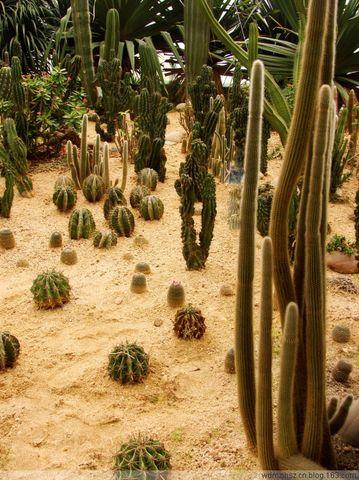 热带植物园(3)——沙生区 - MOMO - MOMO的博客