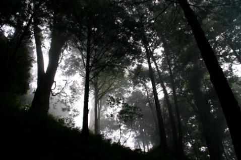 台湾印象 - 岸沐 - 岸沐的博客